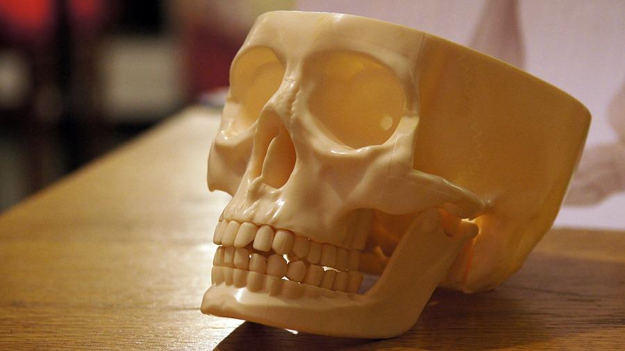 черепушка от журнала Человеческое тело