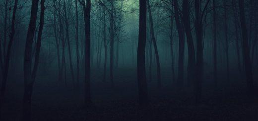 night-forrest
