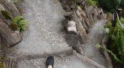 Тропинки в  Ботаническом саду Тарту