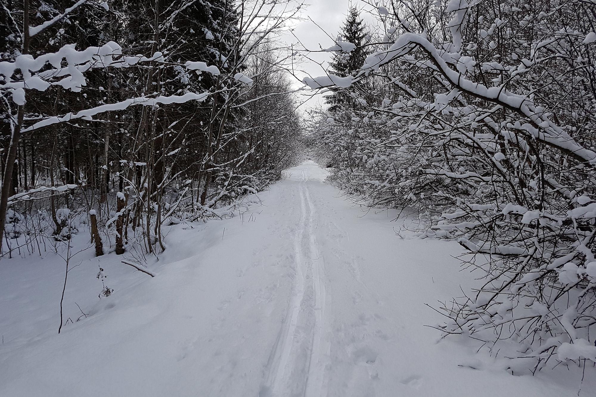 Пешком по зимнему лесу в поисках гейзеров под Гатчиной