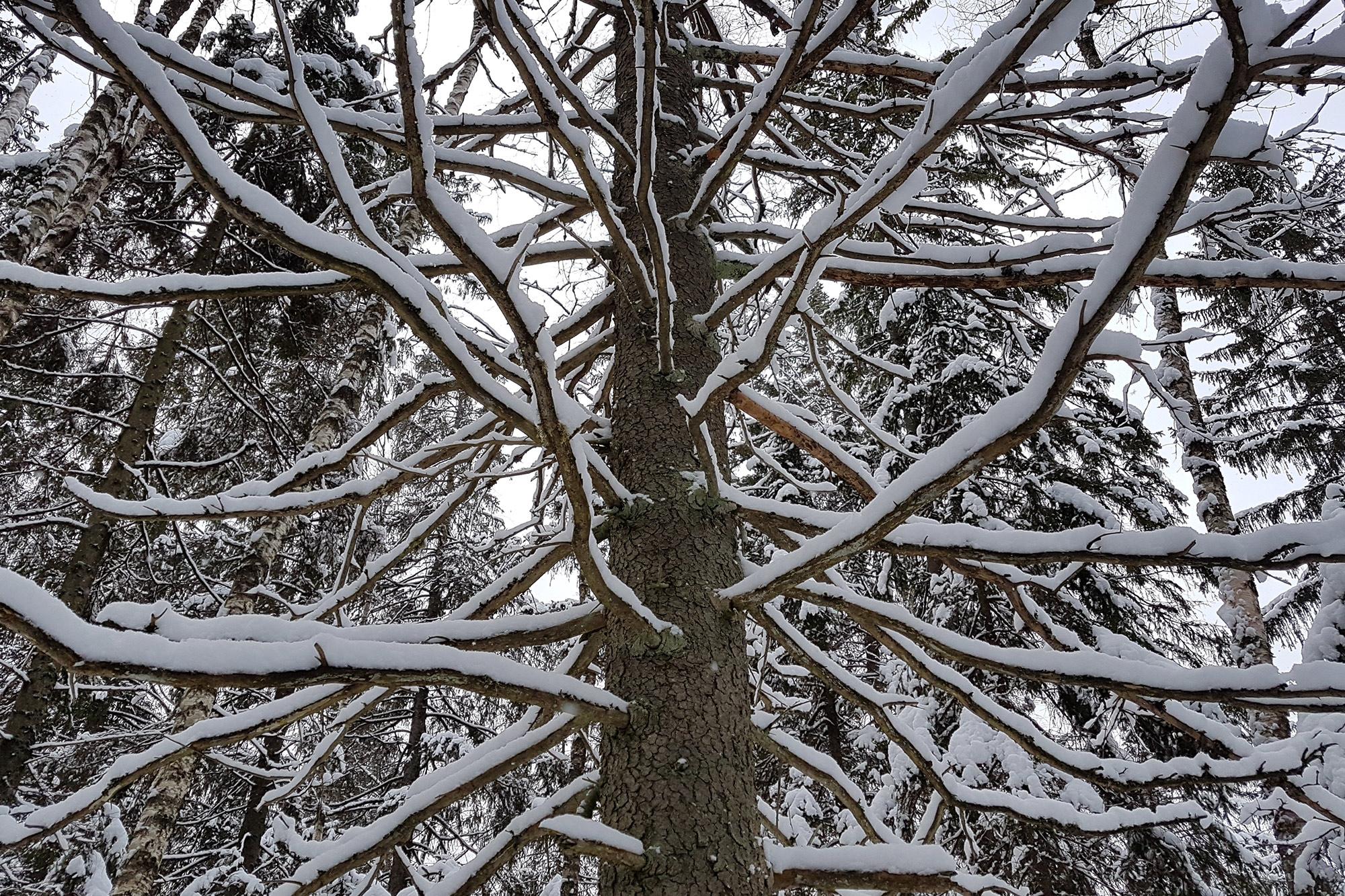 встречаются чудные деревья